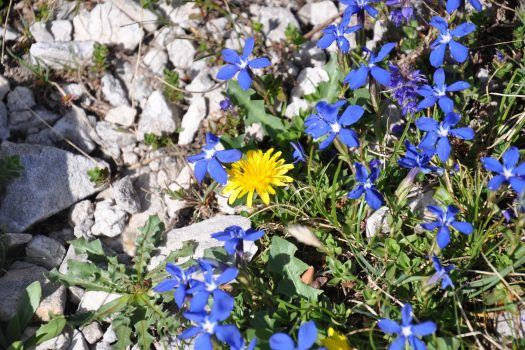 пролетни планински цветя