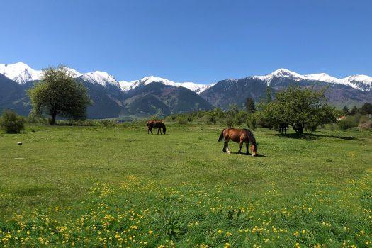 meadows and peaks